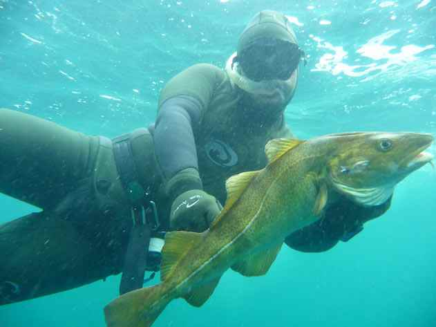 spearfishing cod