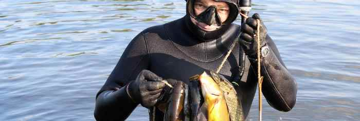 Spearfishing-species-guide