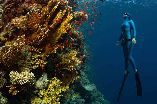 Freediving holidays
