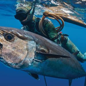 Riffe Blue Water Elite speargun spearfishing