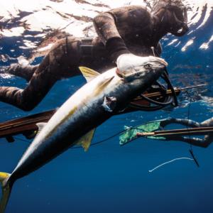 Riffe Island Elite speargun in water