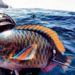 Spearfishing in Bali